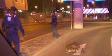 Polizei stellt sich Biber mit Schutzschild in den Weg