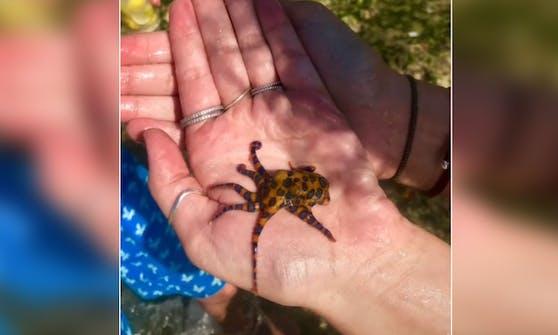 """Unwissentlich """"spielte"""" die Amerikanerin Kaylin Phillips auf Bali mit einem hochgiftigen blaugeringelten Kraken."""