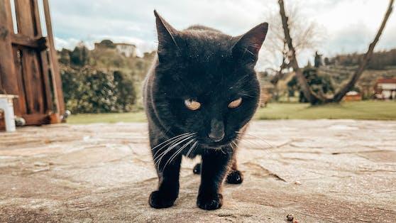 Wissenschafter fanden nun heraus, dass wir Katzen wohl tatsächlich schmecken.