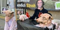 """Tierschützer beklagen: """"Das hält kein Schwein aus!"""""""