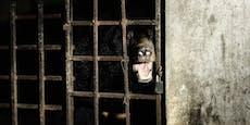 17 Jahre Dunkelheit! Galle-Bären sehen endlich Licht