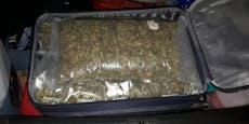 Acht Kilogramm Cannabiskraut in Reisekoffer versteckt