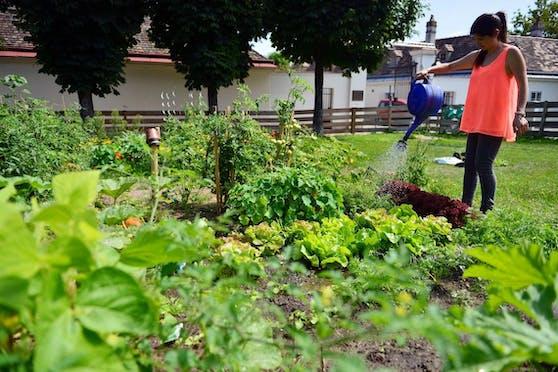 Im Rahmen der heurigen Urban Gardening Initiative spendete das Landwitschaftsministerium zahlreiche Beete.