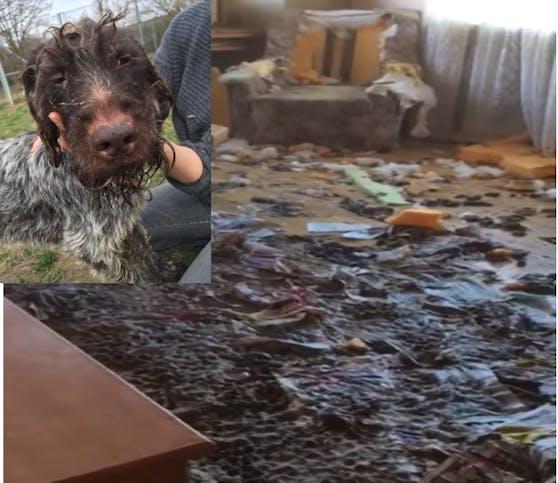 Sieben Hunde wurden aus einer völlig verwahrlosten Unterkunft befreit.