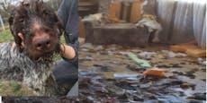 Tierquälerei! 7 Hunde lagen verletzt in ihren Fäkalien