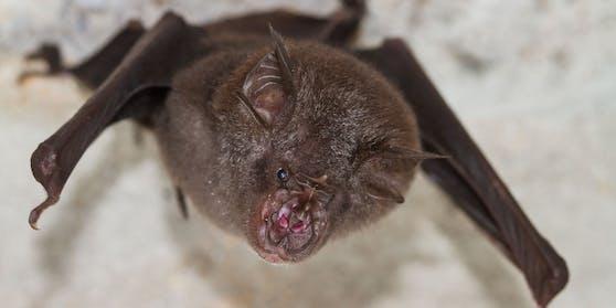 Experten der WHO erachten es als am wahrscheinlichsten, dass das Corona-Virus von einem Tier auf den Menschen übertragen wurde. Sie gehen davon aus, dass es sich um Fledermäuse handelte.