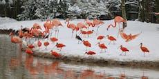 Unbekannte stehlen Flamingo –Motiv noch unklar