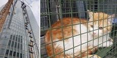 Katzen-Rettung aus dem 23. Stock in 1030 Wien