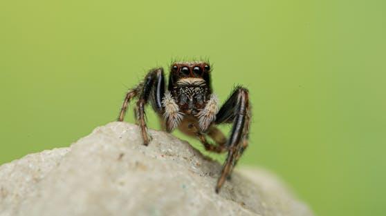 Forscher wollen jetzt herausgefunden haben, dass Spinnen eine bestimmte Farbe bevorzugen.