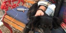 3.500 Euro Kopfgeld auf Wiener Hundekiller ausgesetzt