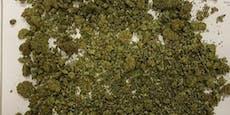 Cannabis-Indoorplantage in Wien ausgehoben