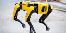 "Robo-Hund ""Spot"" hilft bei Ikea mit"