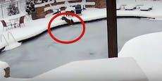 Schock! Hund bricht in gefrorenen Pool