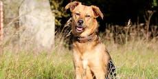 Streit um Hunde-Gacki musste von Polizei beendet werden