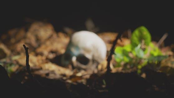 Ein menschlicher Schädel (Attrappe) im Wald. Symbolbild