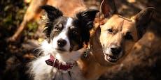 Ordnungswidrigkeit! Abstandsregel für spielende Hunde