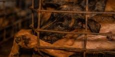 Die letzten 16 Hunde aus der Hölle gerettet
