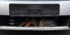 Hund fuhr 40 Kilometer im Kühlerhohlraum mit