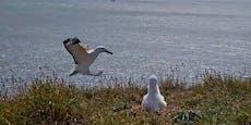 Tollpatschigste Albatros-Landung geht viral