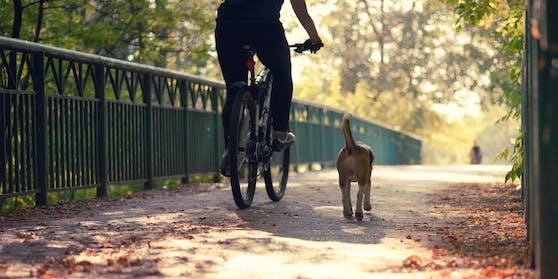 Ein Radfahrer neben einem Hund. Symbolbild
