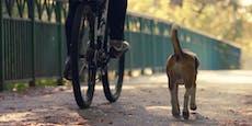 """Radfahrer tötet Hund, braust nach einem """"Sorry"""" davon"""