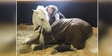 Britisches Reality-Sternchen lässt Pferd ausstopfen
