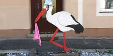 17 Strafverfahren nach Storchenfeier in Steinhaus