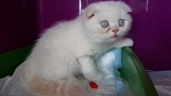 Das arme Ding! Dieses Kätzchen wurde einfach in einer Tasche mitten auf der Straße abgestellt.