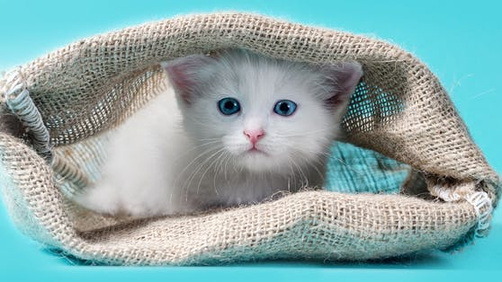 """Redewendungen wie """"Die Katze aus dem Sack lassen"""" sind Tierrechtsorganisation PETA ein Dorn im Auge."""
