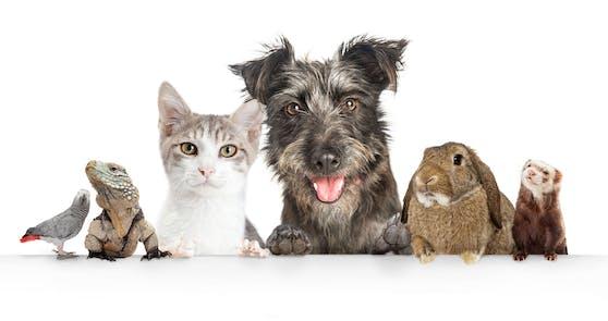 Im Laufe des Lebens unserer Haustiere kommen teilweise ganz schöne Summen zusammen.