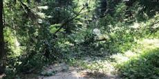 EU ist laut WWF-Bericht zweitgrößter Waldzerstörer