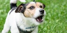 Nervig! Kann ich meinem Hund das Bellen abgewöhnen?
