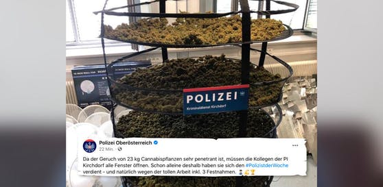 In Kirchdorf stellte die Polizei eine riesige Cannabis-Plantage sicher.