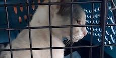 """Koks-Katze nach """"Festnahme"""" zur Adoption ausgeschrieben"""
