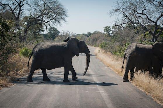 Elefanten im Krüger-Nationalpark.