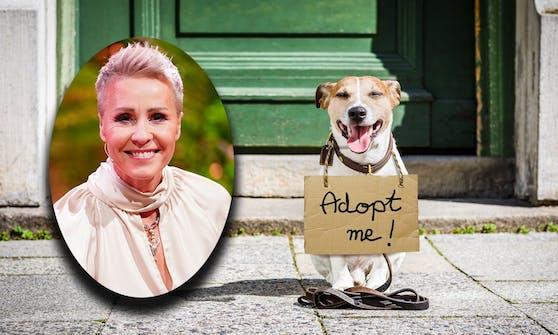 """Die beliebte RTL-Moderatorin Sonja Zietlow moderiert ab Juni """"The Dog House""""."""
