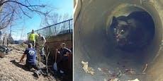 Verletzte Katze in Hernals aus Kanalrohr geborgen