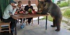 Schon mal mit einem Bären gejausnet?