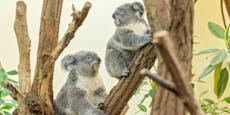 Tiergarten trotz Corona: So kommst du nach Schönbrunn