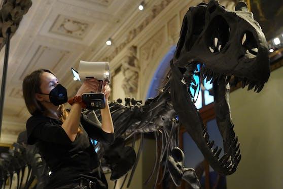 Das D in 3D steht im Naturhistorischen Museum Wien jetzt für Dinosaurier. Ab jetzt können Objekte des Museums auf der webbasierten Plattform Sketchfab digital und in 3D aus neuen Perspektiven betrachtet werden.