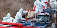 China bestätigt ersten Fall von Vogelgrippe bei Mensch