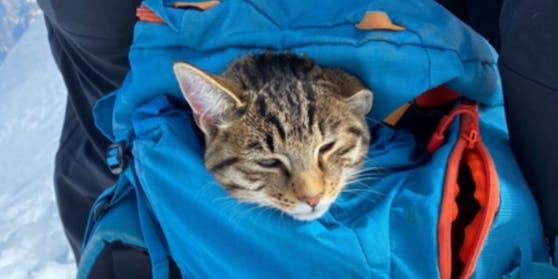 Ein ausgebildeter Bergführer versuchte die Katze im Rucksack auf die Abfahrt mitzunehmen.