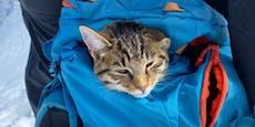 Katze reißt aus und besteigt zwei Mal einen 3000er-Berg