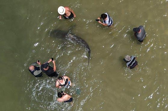 Vor der Küste von Israel gibt es derzeit eine wahre Hai-Invasion.