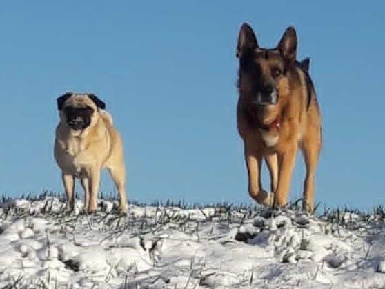 """Schäferhund """"Toni"""" hat eine traurige Lebensgeschichte."""