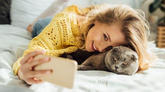 Hier seht ihr welche Katzenrassen am Häufigsten für das Internet fotografiert werden.