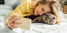 Diese Katzenrassen sind der Hit auf Instagram!