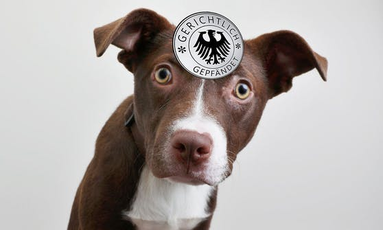 Unterliegen Haustiere in Österreich wirklich dem Pfändungsschutz?