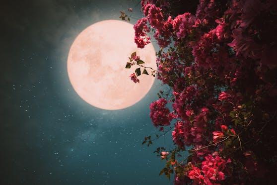 Der rosafarbene Vollmond macht die Nacht auf 27. April zum Tag.