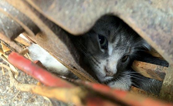 Das kleine Kätzchen saß genau zwischen den scharfen Klingen des Häckslers fest.